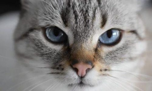 Il gatto diventa il primo animale a risultare positivo al coronavirus nel Regno Unito