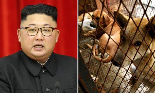 Kim Jong Un confisca i cani domestici: possono possederli solo i borghesi