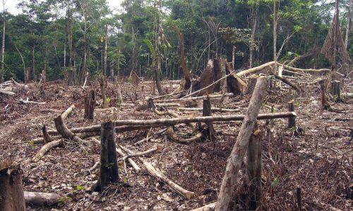 Gli ambientalisti causano disastri ambientali in Europa