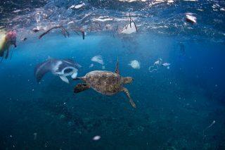 Ambiente: Scoperto Fungo della Plastica
